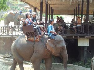 allan kat elephants